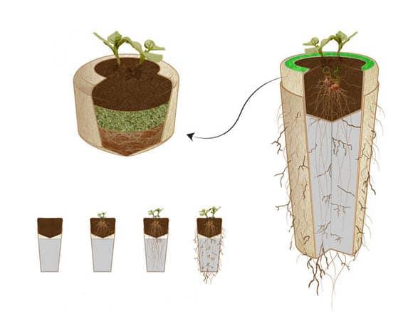 urne fun raire quand vos cendres se transforment en arbre. Black Bedroom Furniture Sets. Home Design Ideas