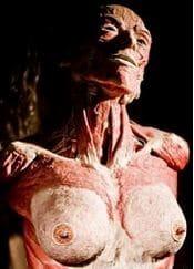 corps-plastine
