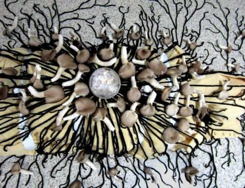Infinité burial project : des champignons comme dernière demeure ?