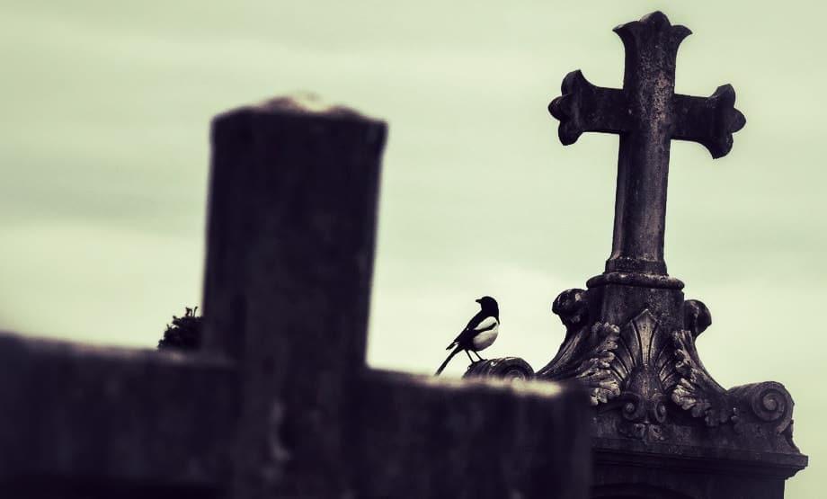Biodiversité : quand le cimetière lyonnais de Loyasse fait figure de pionnier national